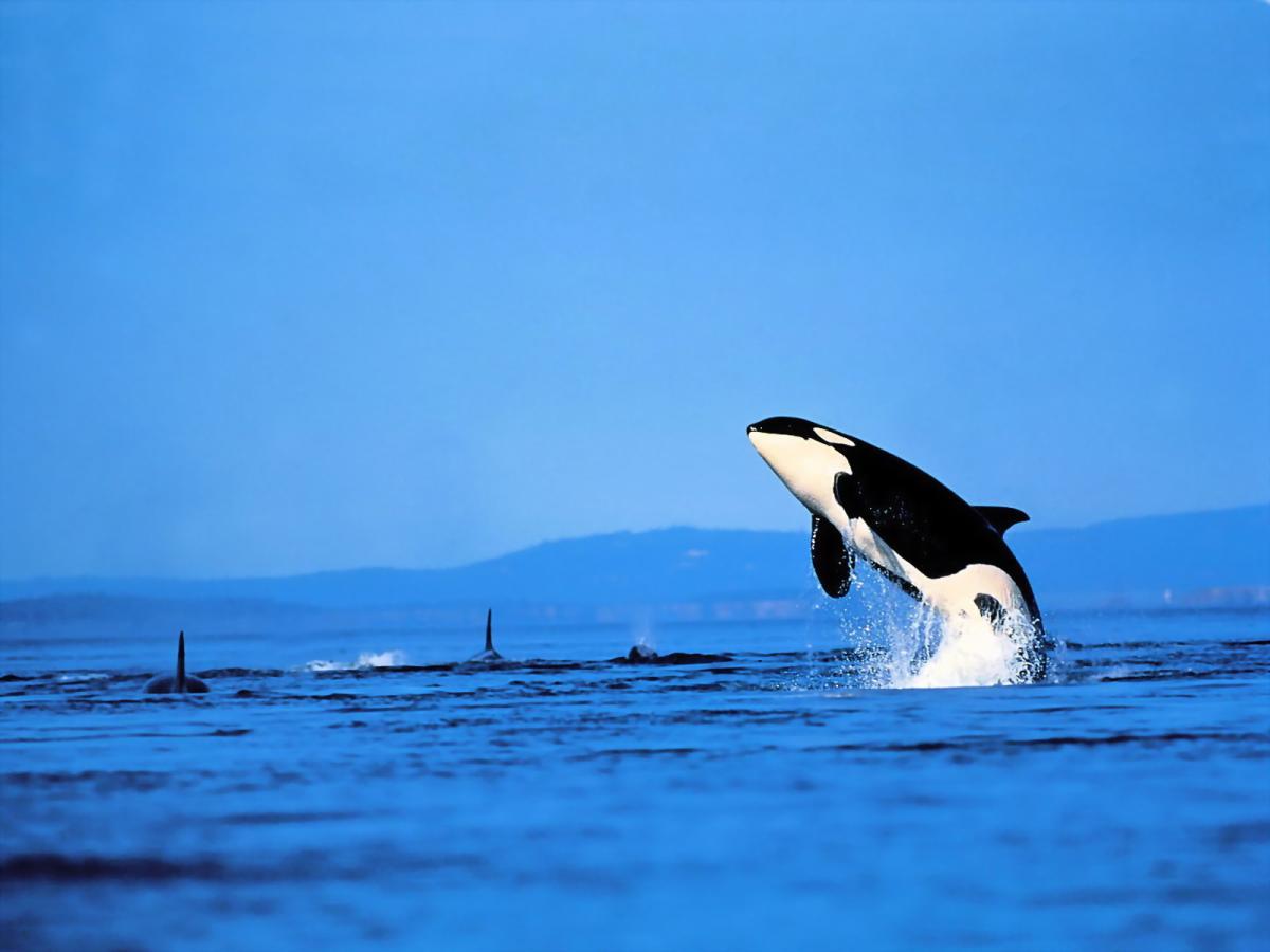 dolphin1600.jpg
